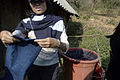 Diep showing us the cloth (in her hands) and the indigo dye (in the bucket) (4109533872).jpg