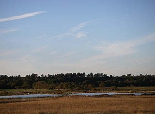 Minsmere–Walberswick Heaths and Marshes