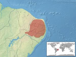 Brazilian galliwasp - Image: Diploglossus lessonae distribution