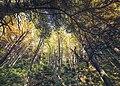 Dirfis woods 4.jpg