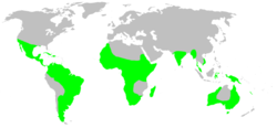 Distribution.deinopidae.1.png