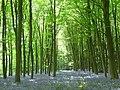 Dodsley Wood - geograph.org.uk - 808451.jpg