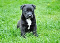 Dog123454.jpg