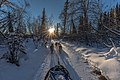 Dogsleds on the trail again 03.jpg