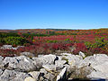 Dolly-sods-fall - West Virginia - ForestWander.jpg