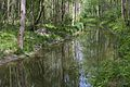 Donauauen ND 03.jpg