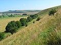 Downland, Maiden Bradley - geograph.org.uk - 907142.jpg
