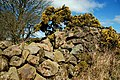 Drystone wall, Lough Mourne - geograph.org.uk - 733797.jpg