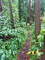 Dschungel (12369189213).jpg