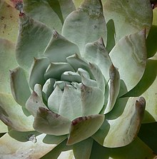 order succulents online