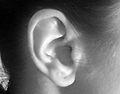 Ear korv.jpg