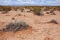 East of the Black Range - Flickr - aspidoscelis (6).jpg