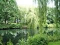 Eimsbütteler Park Am Weiher Bäume (3).jpg