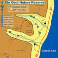 Ein Gedi Nature Reserve Scheme en.png