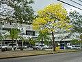 El Dorado, Panamá, Panama - panoramio.jpg
