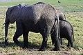Elephants of Kenya 28.jpg