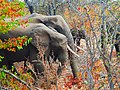 Elephants profile with autumn colors.jpg