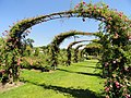 Elizabeth Park, Hartford, CT - rose garden 8 - DSC01444.JPG