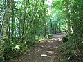 Ely Forest, County Fermanagh - geograph.org.uk - 204242.jpg