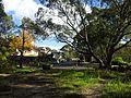 Engadine NSW 2233, Australia - panoramio (153).jpg