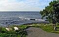 Engelska Bryggan Ystad (högvatten).jpg