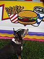 English Bull Terrier.jpg