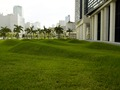 "Environmental art ""Flutter"" at the NE and SE lawn quadrants of the Wilkie D. Ferguson, Jr., U.S. Courthouse, Miami, Florida LCCN2010720283.tif"