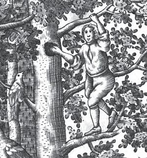 Schloss Rosenau, Coburg - Frontispiece (detail) of Pernau's book of 1707