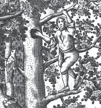 Schloss Rosenau, Coburg - Frontispiece (detail) of Pernau's book of 1707