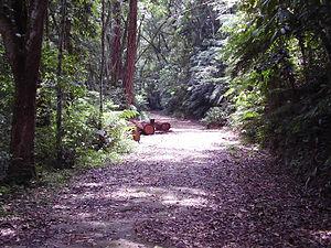 Resultado de imagem para Floresta da Tijuca