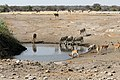 Etosha, waterhole - panoramio.jpg