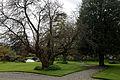 Feeringbury Manor garden gravel path, Feering Essex England.jpg