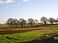 Field and Trees - geograph.org.uk - 289440.jpg