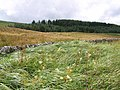 Field and forest near Stannersburn - geograph.org.uk - 212585.jpg