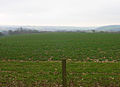 Field to the West of Monkton - geograph.org.uk - 341675.jpg