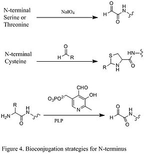 Figure 4. Bioconjugation strategies for N-terminus.jpg