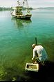 Fisherman, Split, Croatia - panoramio.jpg