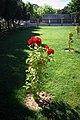 Five City Blocks Smell Of Roses - panoramio (7).jpg