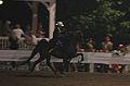 Five Gaited Horse Racking (7714697908).jpg