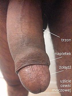 duży seksowny penisasian sex fotki dziewczyny