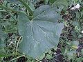 Fleur inconnue pour reconaissance 3.jpg
