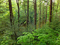 Flickr - Nicholas T - Henry's Woods (Revisited) (1).jpg