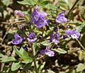 Flora (11) (44880987382).jpg
