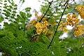 Flora on campus 1.JPG
