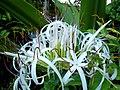 Flores - panoramio (12).jpg