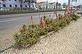 Flores vermelhas em Lisboa (120FAITH 3576) (37308009956).jpg