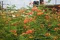 Flower on Terrace.jpg
