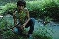Flowers (35148402643).jpg