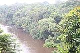 Fluss Dja Somalomo.JPG
