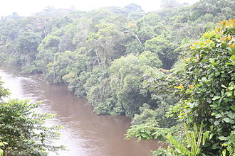 Tropical and subtropical moist broadleaf forests - Rainforest lining a river bank, Cameroon